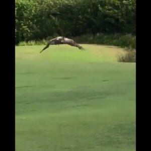 🆕Short Animal Golf Encounters 💥 Golf Animal Bloopers 💥 Check It Out! 💥💥💥